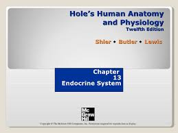 Holes Human Anatomy And Physiology 13th Edition Chapt13 Endocrine
