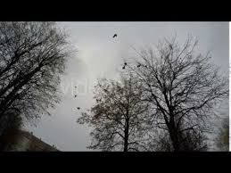 horror flock of birds flying away from trees