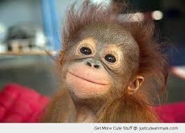Monkey Meme Generator - cute monkey blank template imgflip