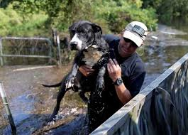 displaced pets from hurricane harvey u2014 and now irma u2014 need our