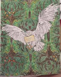 we love this colouring in of hedwig harry potter pinterest