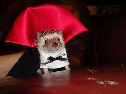 in costumes animals in costumes cus