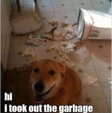 Bad Dog Meme - 24 funny animal pictures of the day funny animals daily lol pics