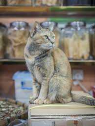 shop cats photographer captures charming felines living in hong