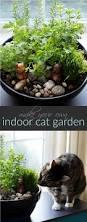 best 25 cat garden ideas on pinterest cat grass cat stuff and