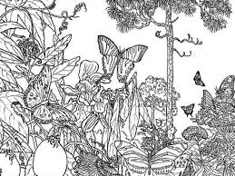 butterfly coloring pages rainforest butterfly coloring pages butterfly rainforest insect