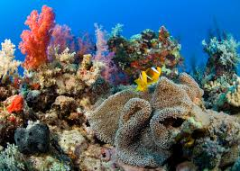 blue economy coral reefs matter blue solutions