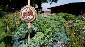 this winter make garden signs with your students to prepare for