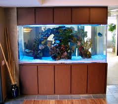 custom aquariums aquatic perfection