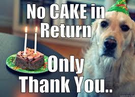 No Cake Meme - sad birthday dog memes quickmeme