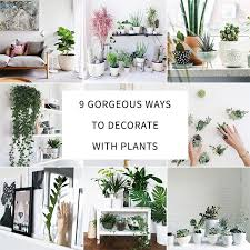 floor plants home decor 9 gorgeous ways to decorate with plants plants decorating and