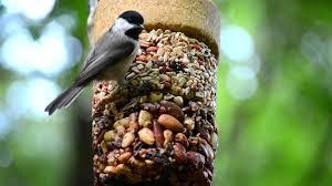 wild birds unlimited flying start combo youtube