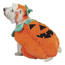Pumpkin Halloween Costume 50 Adorable Halloween Dog Costumes Vittles Vault