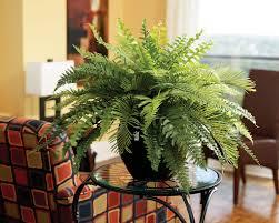 decor plants home super ideas home decor plants plant for decoration 9 gorgeous ways