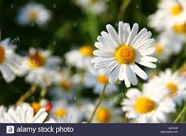 flower delivery near me flowers near me flower delivery stock photo 122661163 alamy