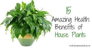 benefits of houseplants 15 amazing health benefits of house plants healthy living in