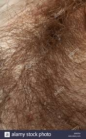 pubic hairs pics woman s unshaven pubic hair stock photo 20500693 alamy