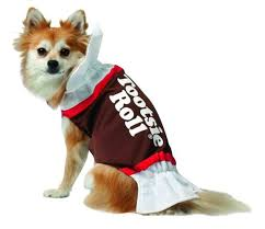 pets adorable last minute costumes for small dogs and
