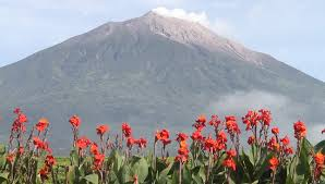 volcano flowers flowers and volcano kerinci in indonesia stock footage