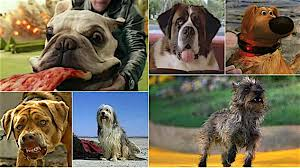 movies with australian shepherds in them best in shows the 100 most iconic dogs in movies movies