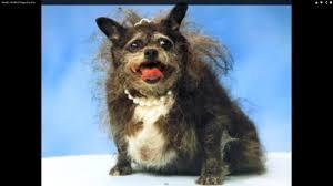 Ugliest Top 5 Ugliest Dogs According To Sonoma Marin County Fair World U0027s