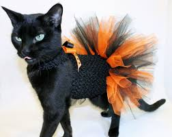 coolcats orange and black halloween costume tutu for cats