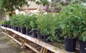 tips for vegetable garden care in summer alden lane nursery