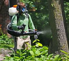 beat mosquitoes in your backyard midwest home magazine