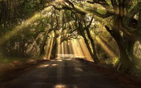 gorgeous sun beams through a canopy of trees forests nature