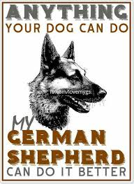 belgian malinois quotes the german shepherd german shepherd dogs all types w belgian