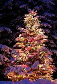 Outdoor Lighted Trees Outdoor Trees Outdoor Lighted Trees On Imgfave