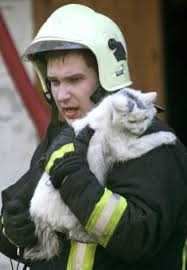 15 pictures of cats saved by firemen business insider
