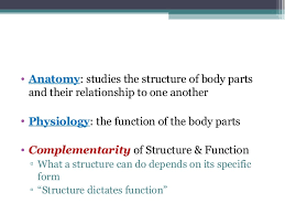 College Anatomy And Physiology Notes Anatomy U0026 Physiology Lecture Notes Ch 1 Introduction
