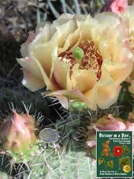 Identify Flowers - cactaceae cactus family identify plants flowers shrubs and trees