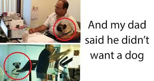 Memes About Dads - 10 dads who didn t want the damn dogs in their lives bored panda