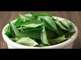 Curry Leaf Plant Diseases - make daily curry leaves many diseases away health fresh youtube