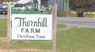thornhill farm christmas trees is now open after a year of