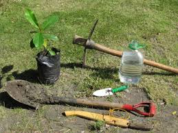 general tips for tree planting essc