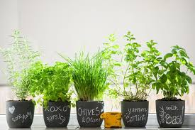 Herb Container Garden - how to make a pizza garden in a container
