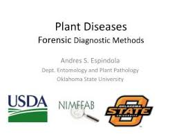 Plant Disease Diagnosis - ppt horizontal resistance to plant diseases powerpoint