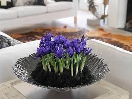 Irises How To Plant Grow by Growing Guides How To Grow Dwarf Iris Bulbs U2013 Dutchgrown