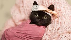 baby dress kitten