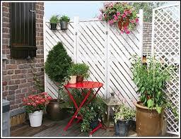 winterharte pflanzen balkon dekor pflanzen balkon home design ideen