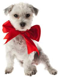 dog ribbon money management can you afford another pet