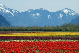 canada flowers hurts in search of eco friendly flowers a j canada s
