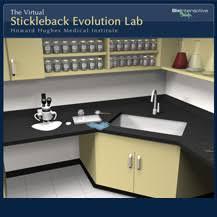 stickleback evolution virtual lab hhmi biointeractive
