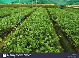 green growing leaves nursery stock photos u0026 green growing leaves