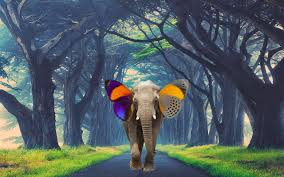diy photoshop tutorial elephant butterfly