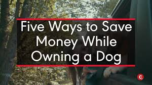 dogs cost money