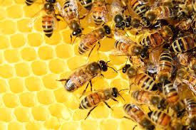 bienen sprüche save the bees
